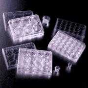 BD Falcon Cell Culture Inserts, Sterile, BD Biosciences 353092 Translucent Inserts