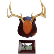 Dead Deer True Classic Antler Mount